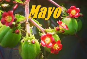 Sorteo Mayo