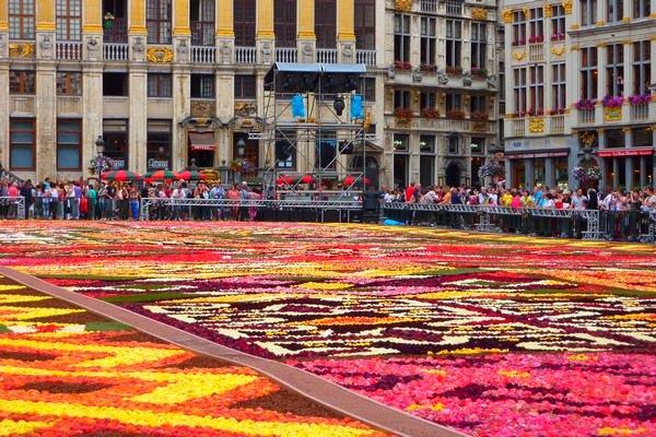 Bruksela Kwiaty Zdjęcia