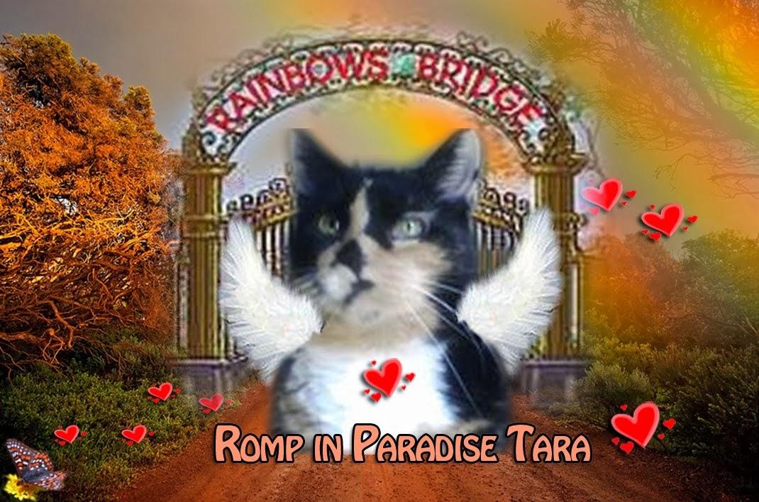 My Blog Angel Tara 7/7/13
