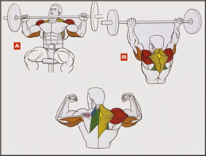 Как качать спину в тренажерном зале - fb84
