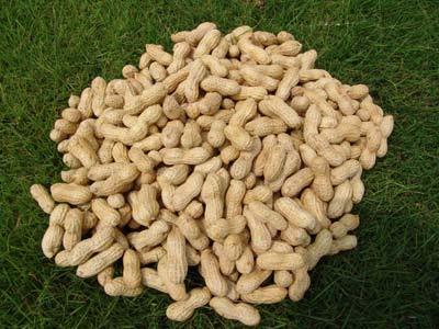 Anda Pelupa? Makan Kacang Tanah [ www.BlogApaAja.com ]