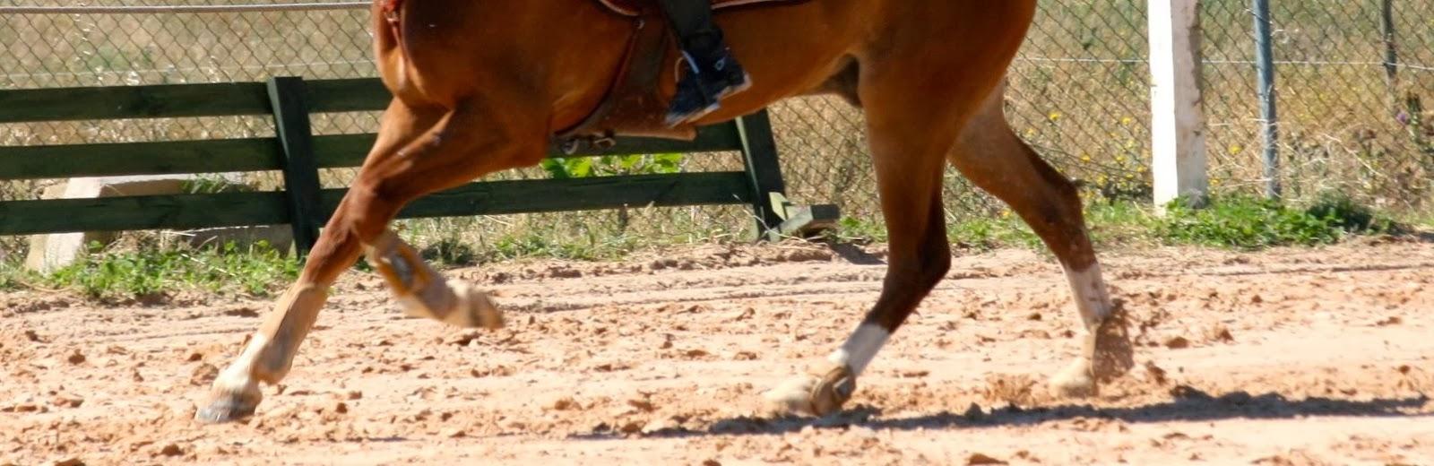 Galopejunior: La cojera en el caballo (I)