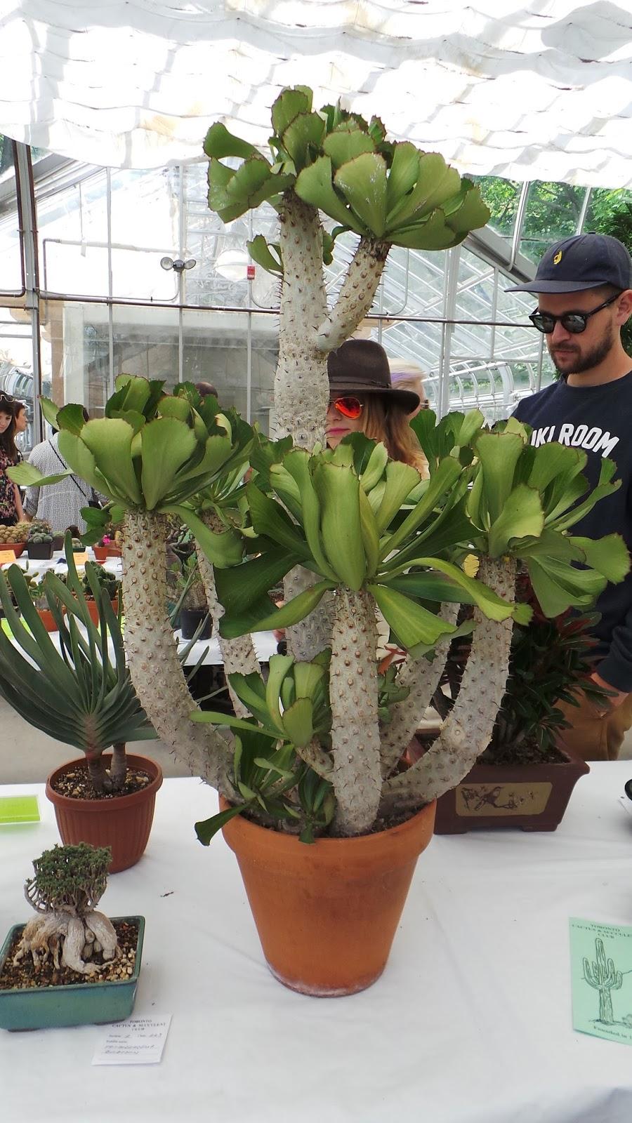 Toronto Cactus Club Show 2015 Part I Wet My Plants