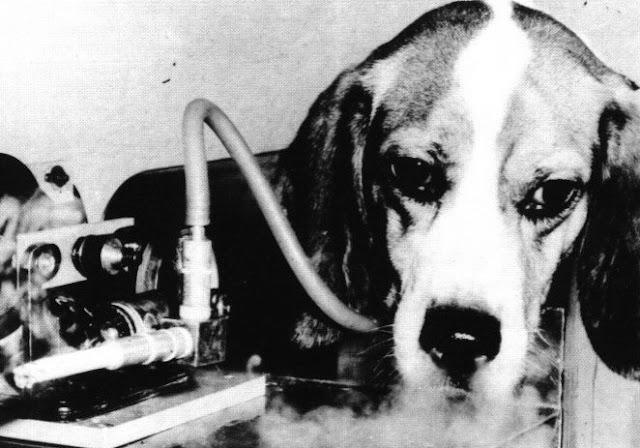 perro fumando en experimento