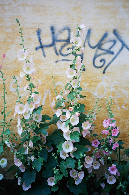 COPENHAGEN, DENMARK HOLLYHOCK 2011 © VAC, FIELDWORK, VISUAL ATHLETICS CLUB, WILD FLOWERS, GRAFFITI