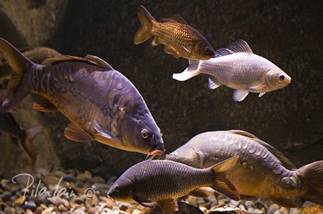 Pilarlainphoto acuario de zaragoza rio ebro for Carpas para acuario