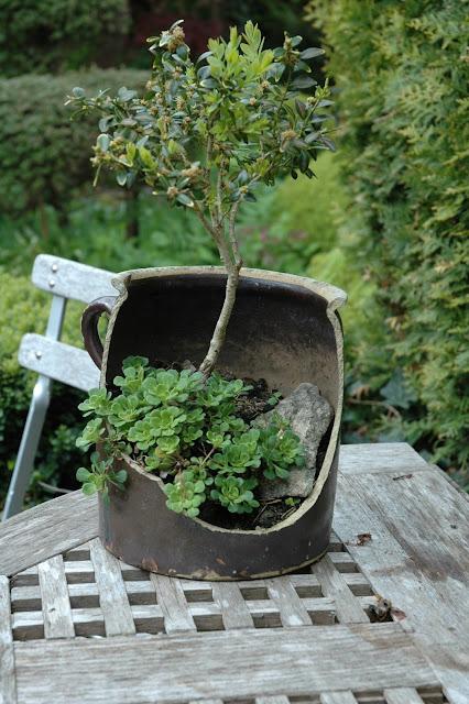 HAVETID: Planter i potter og skåle.