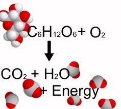 La Glucosa, el combustible del cuerpo humano.