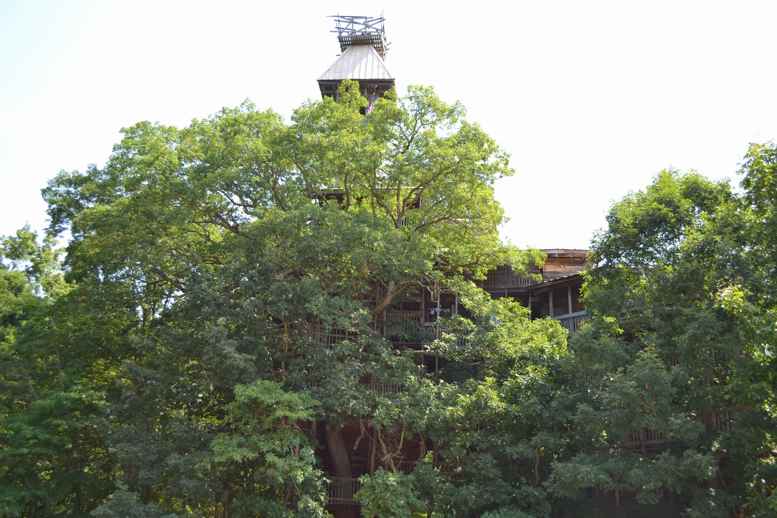 Biggest Treehouse In The World 2015 meanwhile back on the ponderosa. . .: world's largest treehouse