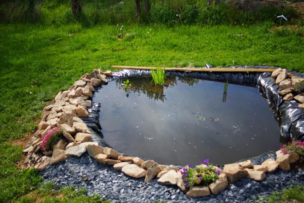 Le Jardin de Nils: La Création d\'un bassin