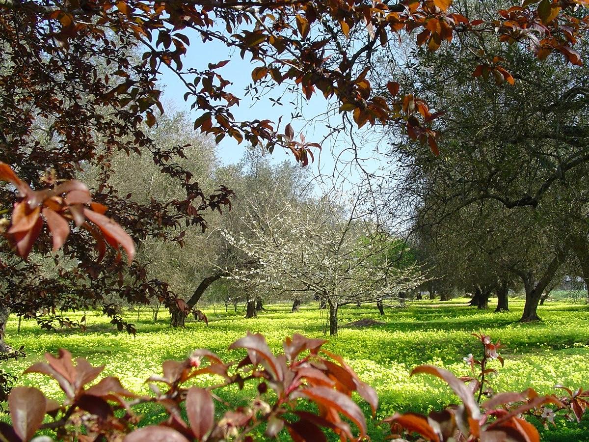 Cinema e teatro: il giardino dei ciliegi the cherry orchard