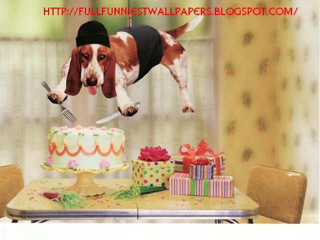 http://4.bp.blogspot.com/-mVAyOV3mLrM/TtSEytpIpcI/AAAAAAAADtI/a0oLvZ68j4s/s640/funny-dog-happy-birthday.jpg