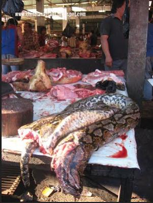 Kota Tomohon, Provinsi Sulawesi Utara, pasar tomohon, gambar pasar tomohon, pasar aneh di dunia, gambar aneh dan pelik, gambar makhluk pelik, daging pelik, pasar malam pelik, pasar paling pelik,gambar pasar malam shah alam, pasar malaysia, gambar geli