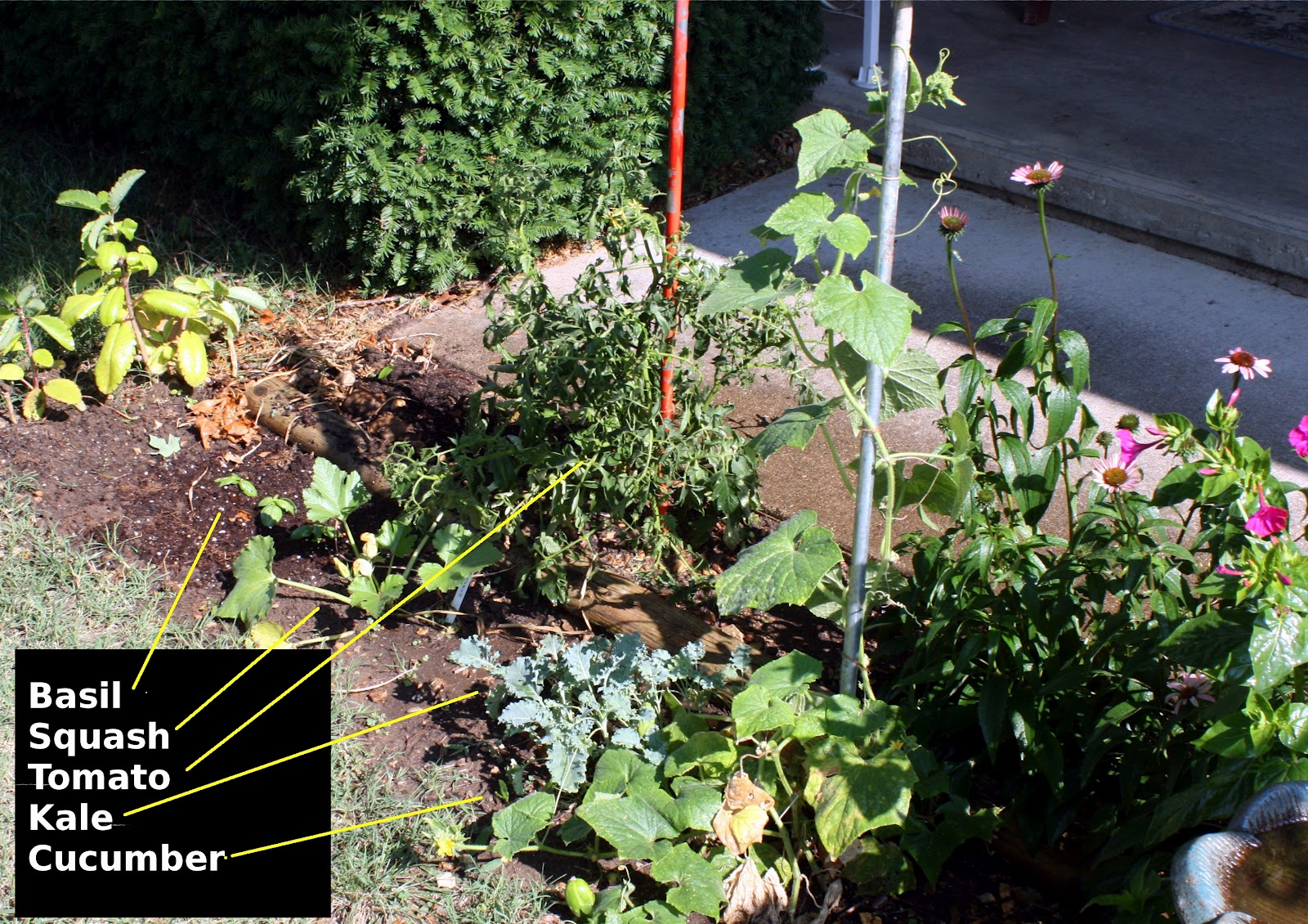 Gardening for the casual survivor vegetable gardens in small spaces - Vegetable gardening in small spaces image ...