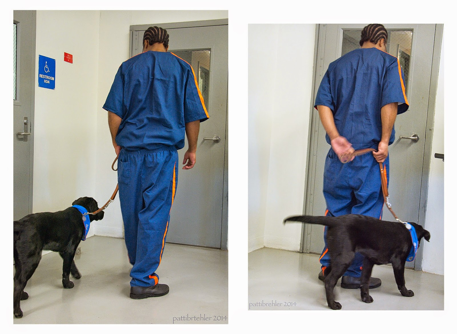 This is also two picture in one. On the left side, an african american man is walking away from the camera toward the same door. He is wearing the blue prison uniform and holding a brown leash in his left hand. The man is looking down at the black lab puppy that is walking next to his left leg. The leash is hanging very nicely loose. In the photo on the right side the man is passing the leash from his left hand to his right hand behind his back while the puppy is moving around to his right side.