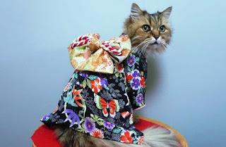 Gambar Wallpaper Kucing Lucu Banget 200028