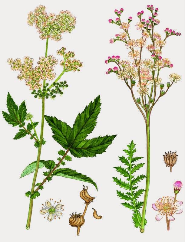 Danmarks flora