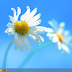 Windows 8 Activator All Version 100 Working