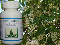 CAPSULAS DE HOJA DE NEEM