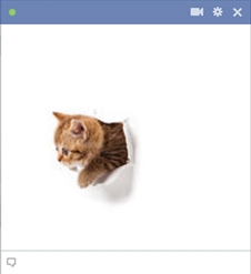 Kitty Cat Torn A Hole In Facebook Chat Box