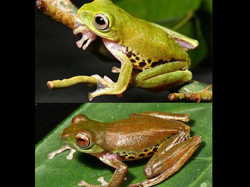 Taman Rahasia Misterius di Borneo