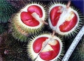 Bahaya dari Buah Durian