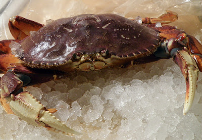 Live Crab on ice