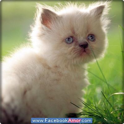 lindo gatito para perfil de facebook