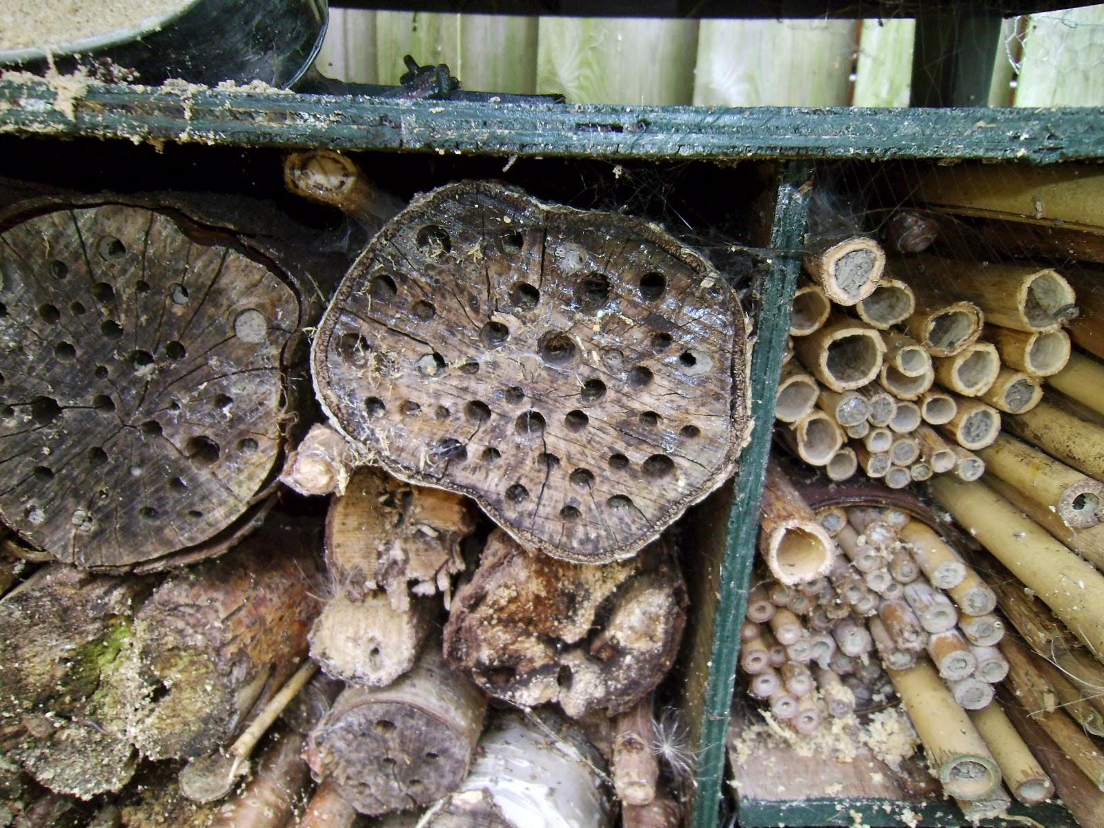 Het paradijsje van jane: creatief #1: een insectenhotel bouwen