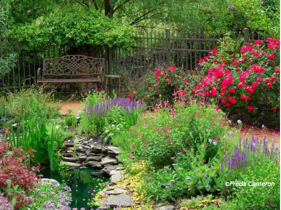 Defining Your Home Garden And Travel Louisiana Iris For Water Features