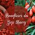 Dica de saúde: Conheça os benefícios da Goji Berry para a saúde