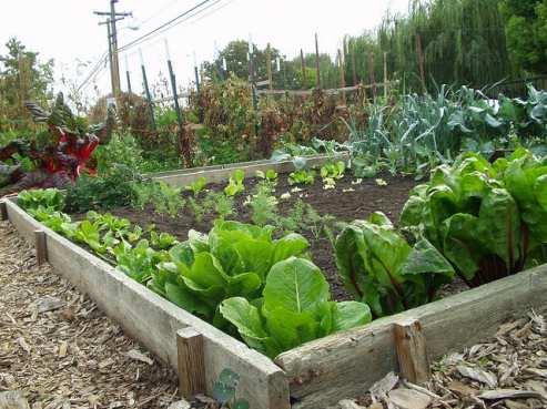 Come iniziare a coltivare un orto in vaso o in piena terra for Garden design vegetable patch