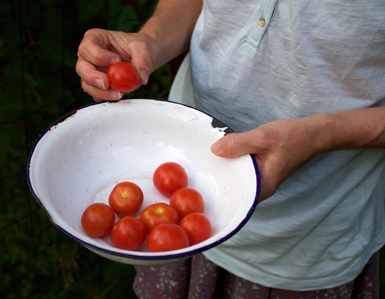 die grash pferinnen endlich die ersten eigenen tomaten. Black Bedroom Furniture Sets. Home Design Ideas