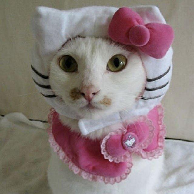 Hello Kitty cat