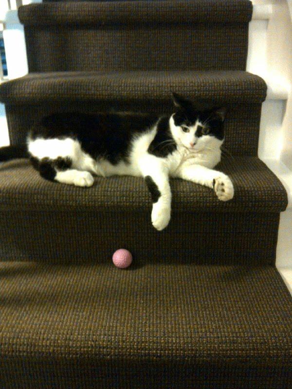 Miss Sasha on the stairs