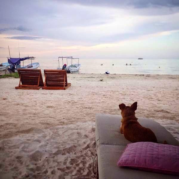 Aprovechando la tranquilidad de la tarde pido una infusión y me siento frente al mar. Un perrito chihuahua llega y se sienta en una hamaca frente a mí. Durante una hora escucharemos juntos respirar al mar.