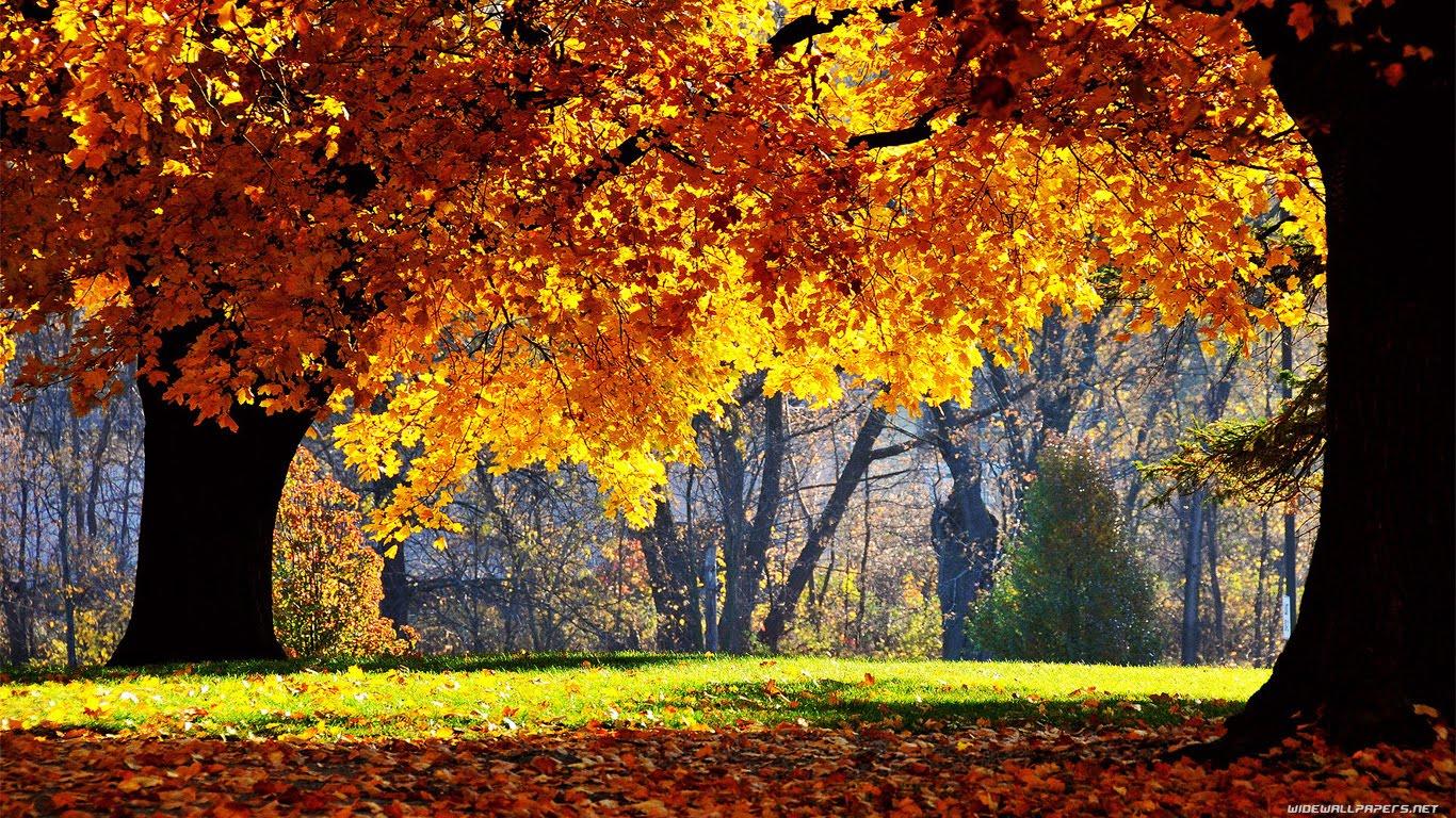 http://4.bp.blogspot.com/-mYIywEhAYWE/Tb7b68zstSI/AAAAAAAAIrE/AjVZ_4_44lM/s1600/nature-wallpaper-1366x768-004.jpg