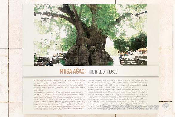 Musa ağacı hakkında bilgi, Hatay Arkeoloji Müzesi