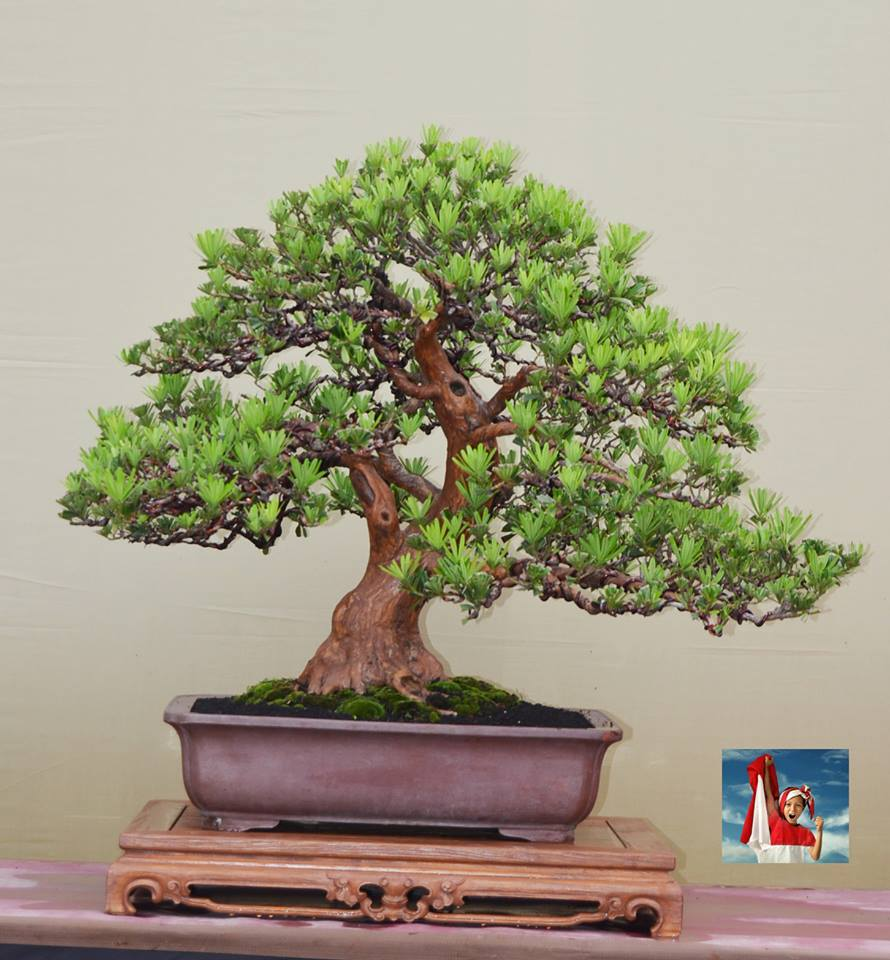 Bonsai Haven
