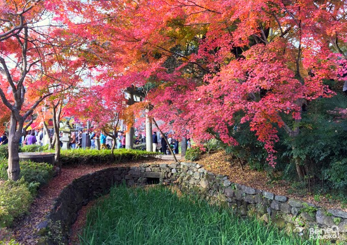 Erables rouges, momiji près des ruines du château d'Akizuki et du sanctuaire Suiyo