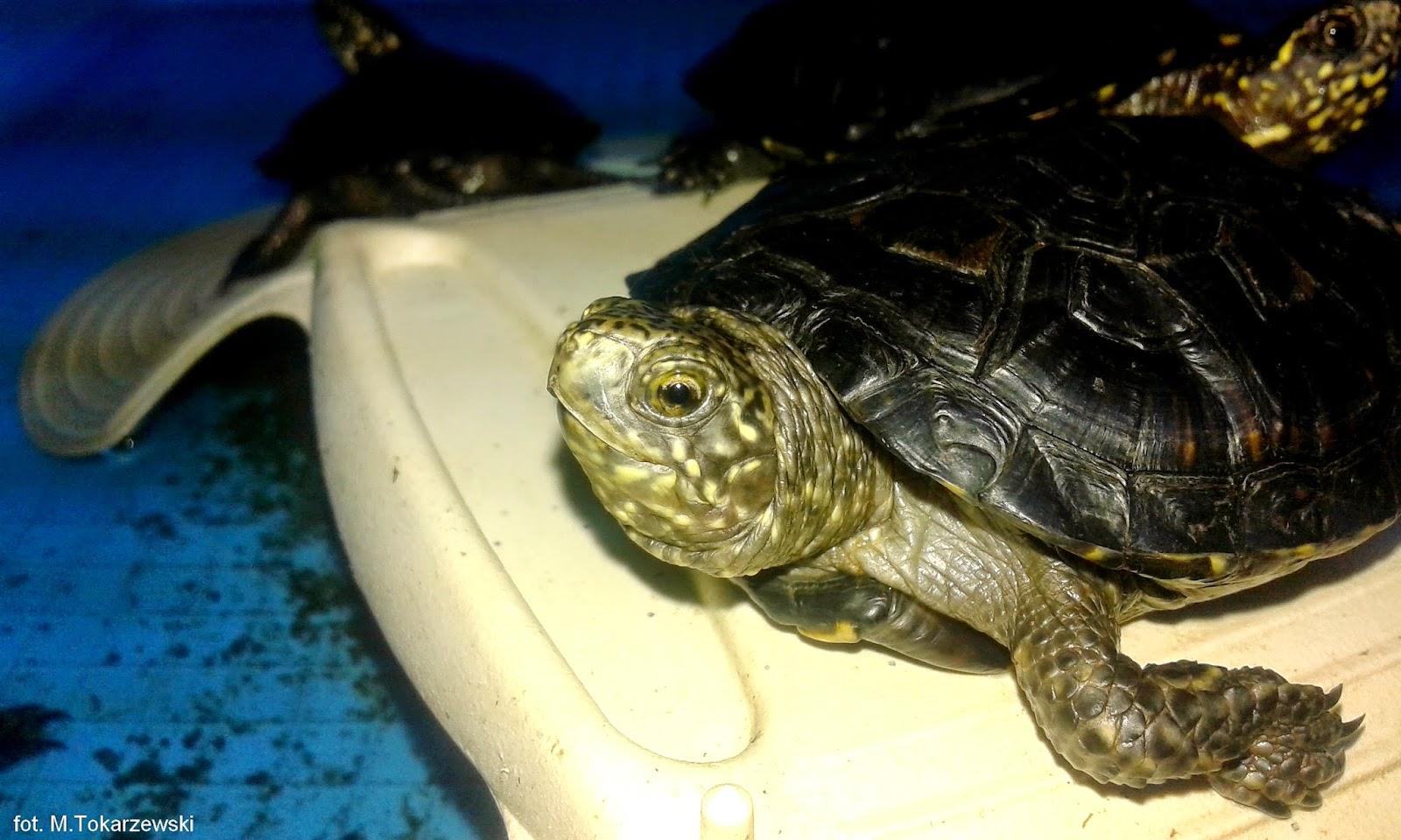 Ośrodek Ochrony Żółwia Błotnego PPN