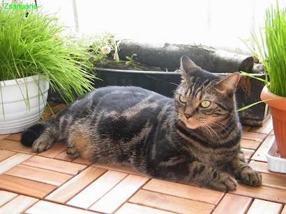 a legméltóságteljesebb cica