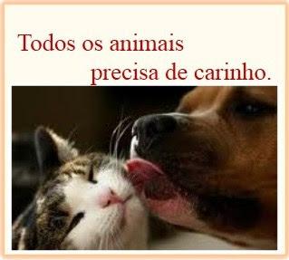 TODOS OS ANIMAIS PRECISAM DE CARINHO