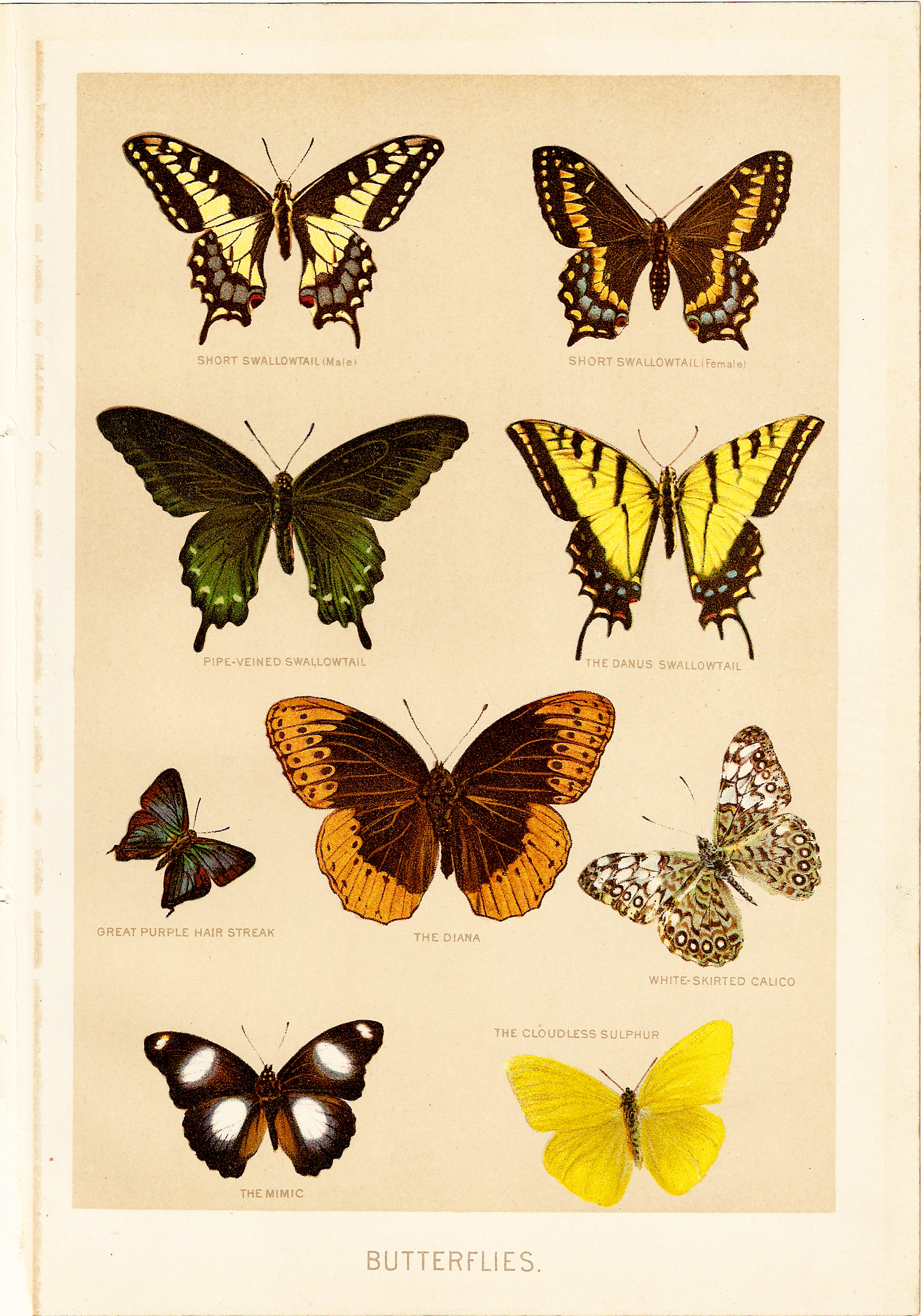 free vintage butterfly clipart - photo #9