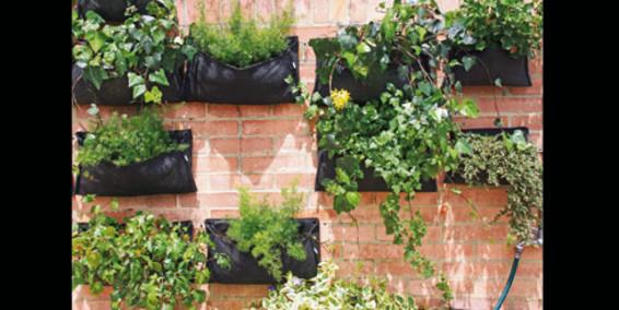 Ps del prado gu a para hacer un jard n vertical en casa - Hacer un jardin vertical ...
