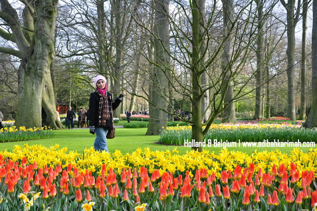 holiday to holland and belgium with premium beautiful at keukenhof tulips festival amsterdam