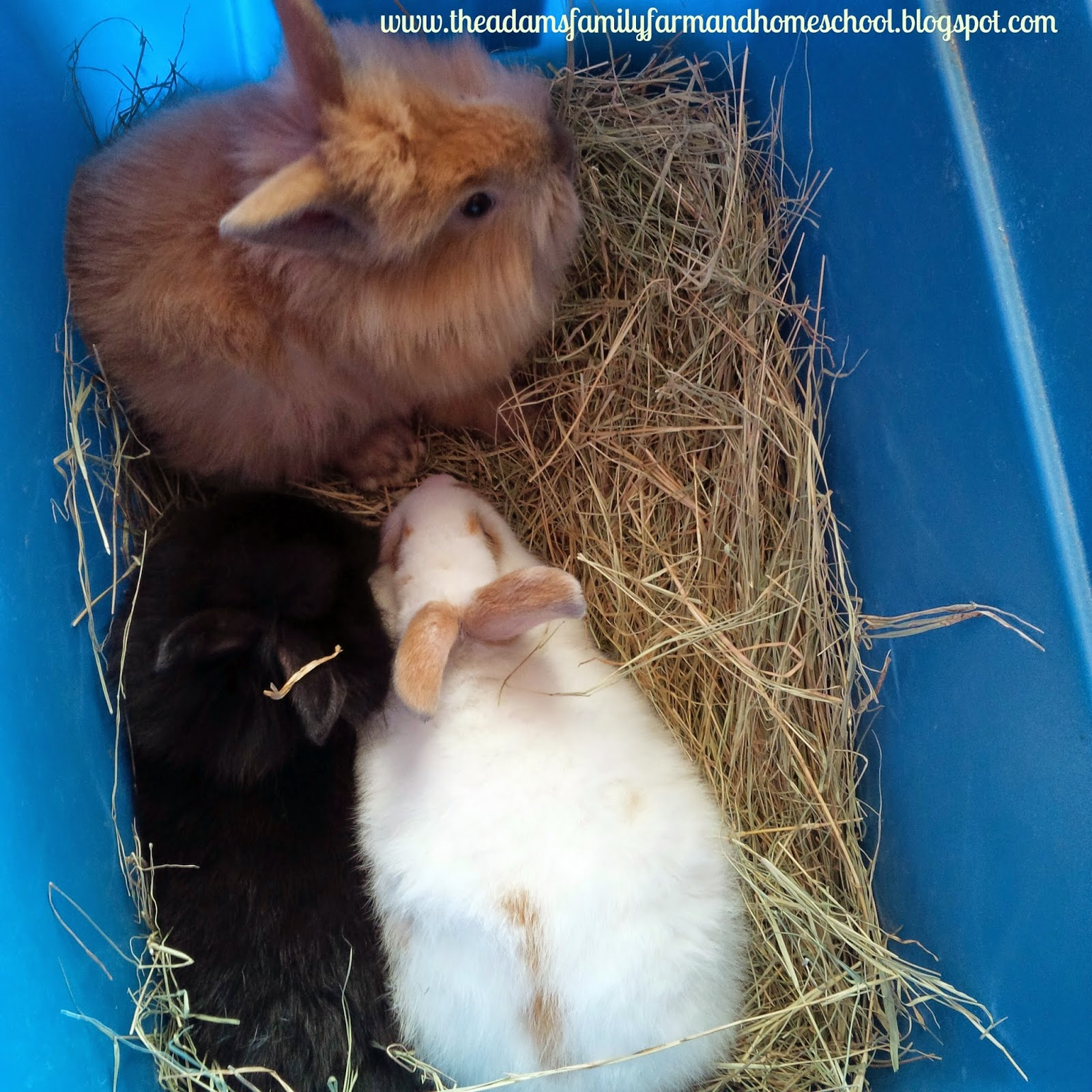 Baby Rabbits sitting in a box with hay