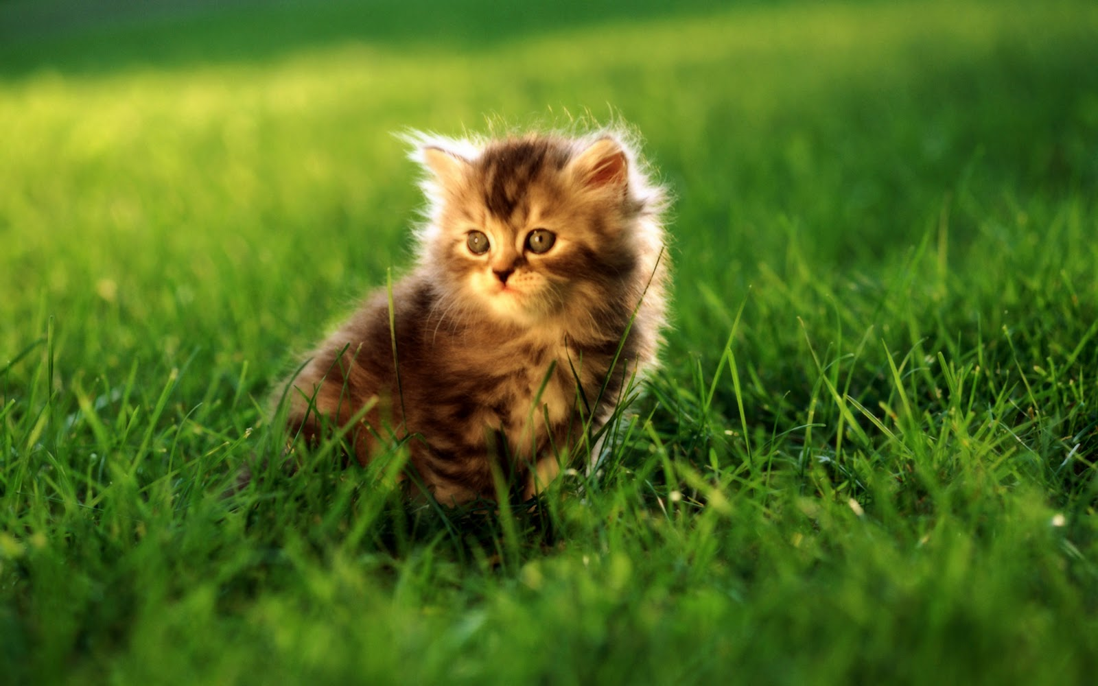 Cute cats 4 pets cute and docile for Gatti sfondi desktop gratis