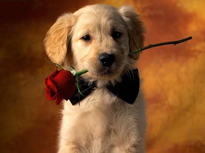Imagenes de amor perrito listo para la cena romantica