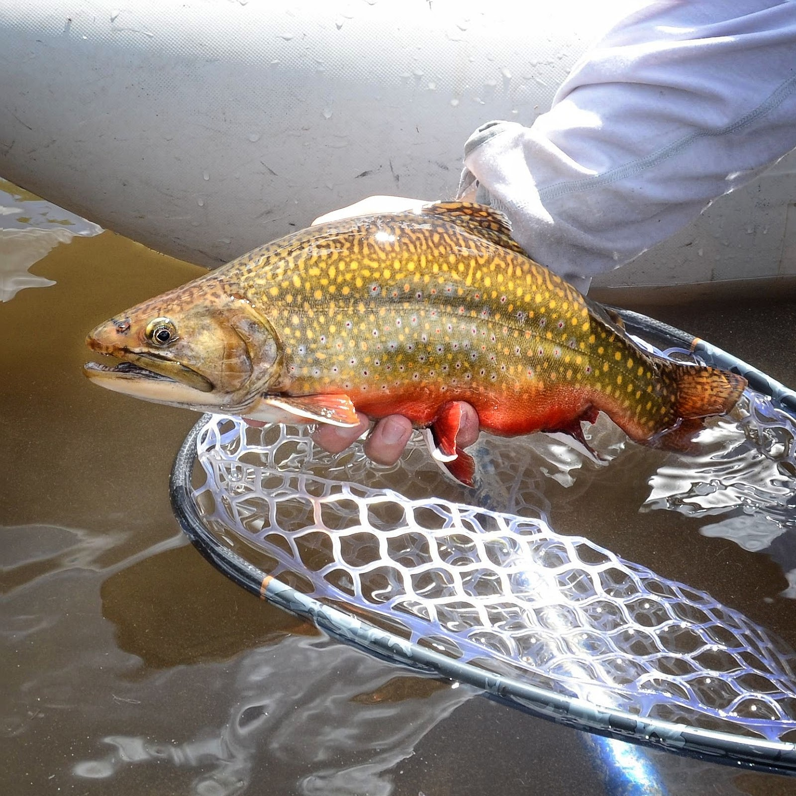 5 Habits of Highly Effective Brook Trout Anglers - Fly ... - photo#17